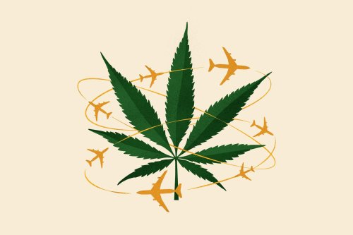 6 questions about traveling with marijuana, answered