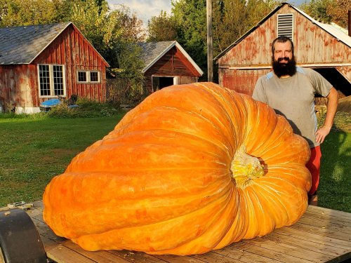 A car-sized pumpkin would have won the 'Super Bowl' of pumpkin growing. There was just one tiny thing wrong.