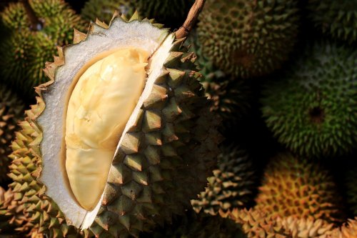 Firefighters scoured an Australian neighborhood looking for a gas leak. They found a durian instead.