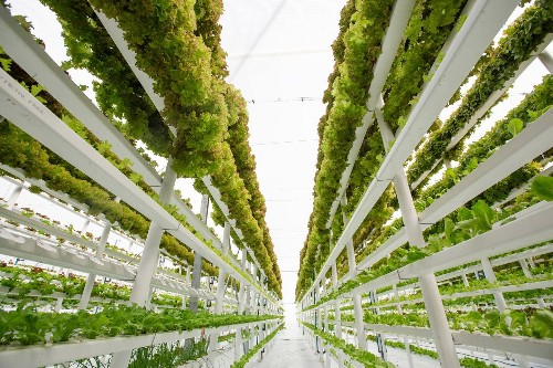 Farming on the moon and meat grown in a lab. Six thoughts on the future of food.
