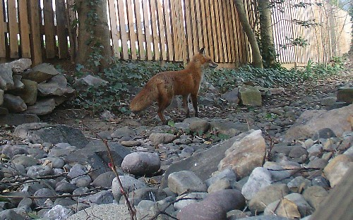 What wild animals walk through your yard? A trail cam can help you find out.