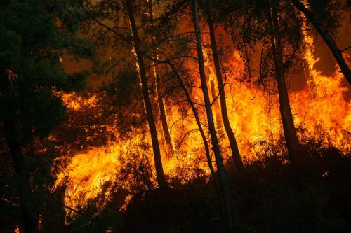 Turkey's wildfires tell a devastating story of neglect and failure
