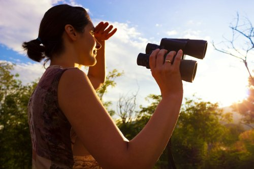 A concise guide to birding in your own backyard