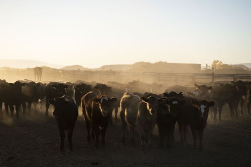 The meat industry is doing exactly what Big Oil does to fight climate action