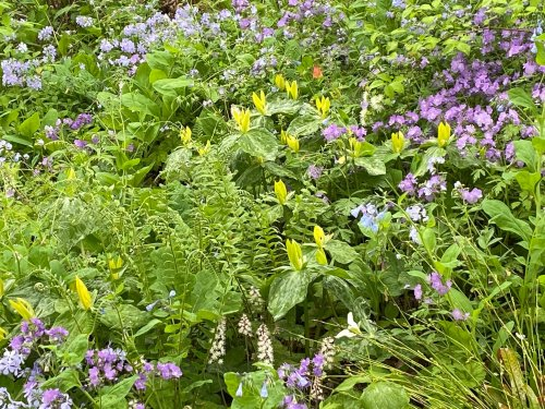 These native woodland plants deserve a spot in any garden