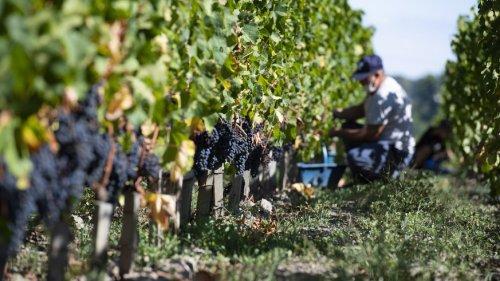 Jedes Jahr nehmen sich in Frankreich Hunderte Landwirte das Leben – Witwe bricht Schweigen