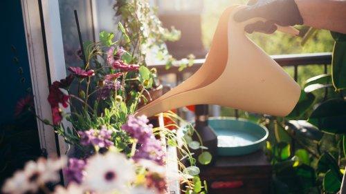Balkon & Garten: Das brauchen deine Pflanzen bei der plötzlichen Sommerhitze