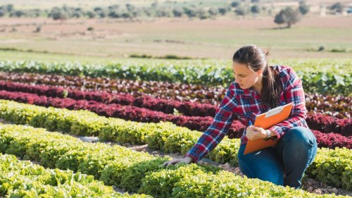Weniger Pestizide und mehr Bio: EU plant weitreichenden Wandel in der Landwirtschaft
