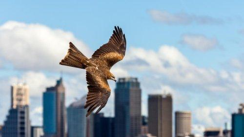Forscher schützen Vögel davor, gegen Glasscheiben zu fliegen – mit speziellen Tönen