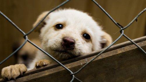 """Tierheime warnen: """"Nach der Pandemie rechnen wir mit einer großen Abgabe-Welle"""""""