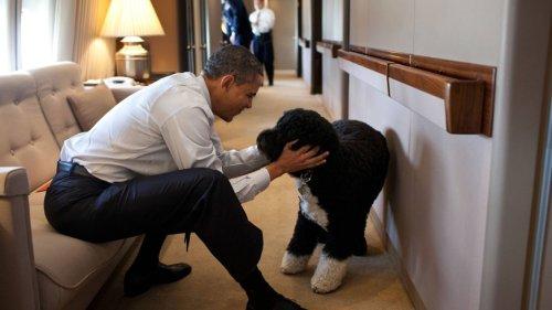 """Obamas trauern um Familienhund Bo: Ein """"wahrer Freund"""""""