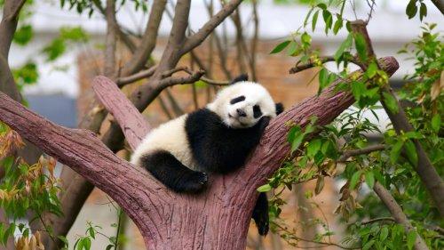 China verspricht 200 Millionen Euro für globalen Artenschutz