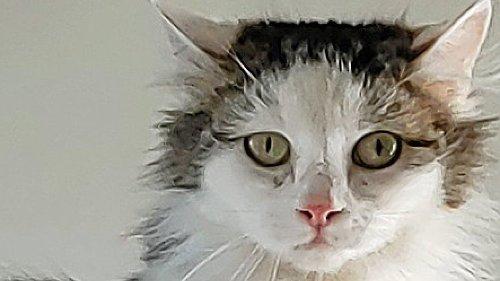 Tierfreunde Bottrop suchen ein Zuhaus für Princess