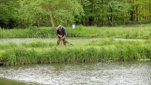 Bentophos gegen Algenwachstum: Fische werden abgefischt