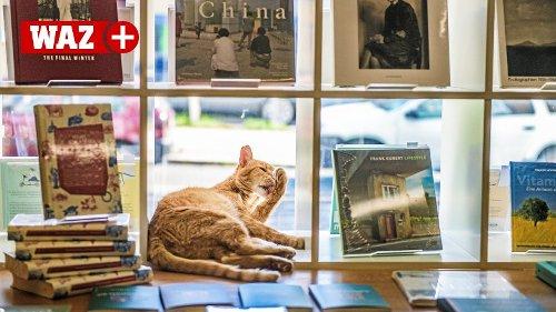 Kobo Melone miaut: Neue Verse für Katzen und ihre Verehrer