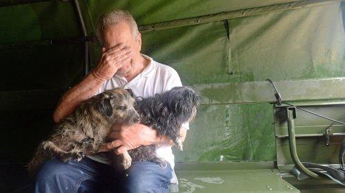 Tierschützer geben herrenlosen Tiere nach der Flutkatastrophe ein Zuhause