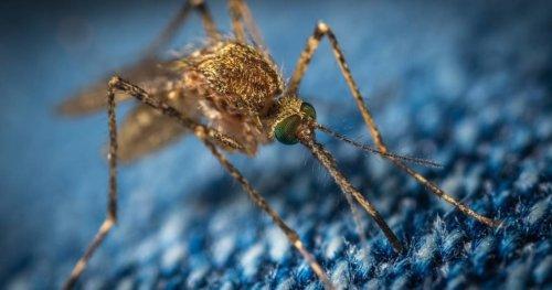 Forscher decken auf: Das zieht Mücken wirklich an!