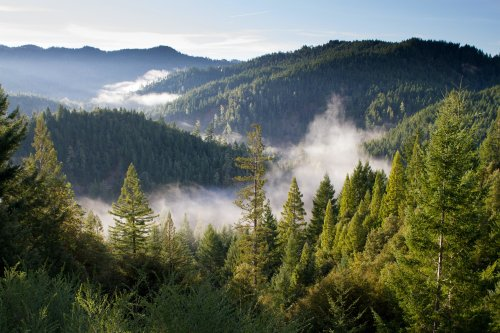Everything you need to know about the trillion trees movement