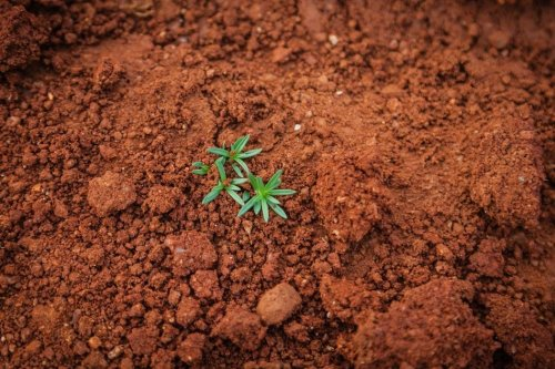 Soil could help in the fight against climate change - or make it worse. The outcome is in our hands