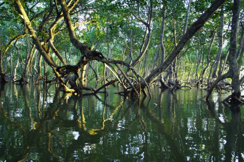 These stunning photographs show how vital mangroves are to the health of the planet