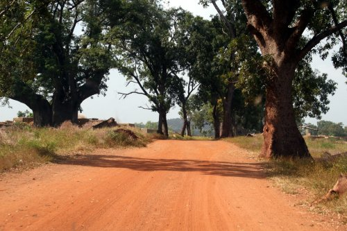 What Burkina Faso can teach us about forest restoration