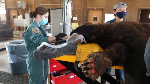 It's not just humans hit by California's wildfires. Rescue teams are saving animals too