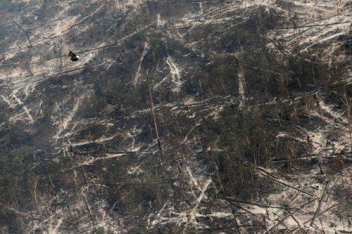 Déforestation : 43 millions d'hectares sont partis en fumée en 13 ans