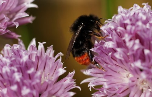 How gardens can boost biodiversity and help tackle climate change