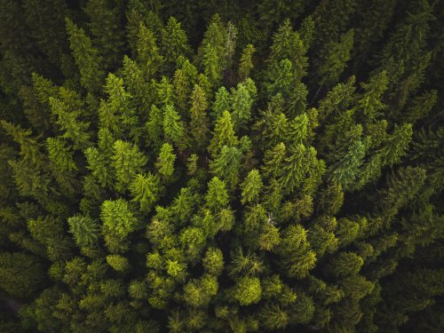 Innovating for nature: Unlocking carbon markets for people, climate and the planet