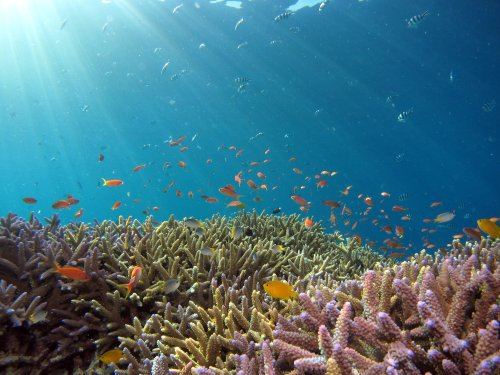 First-ever high resolution map of world's coral reefs is complete