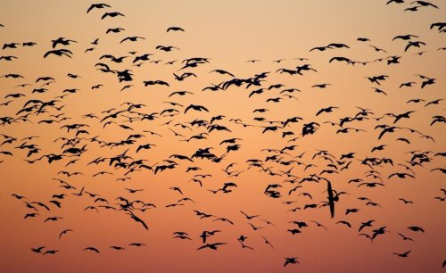 Here's one easy thing you can do at home to save migrating birds