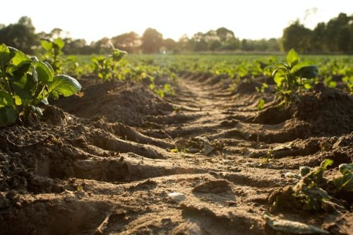 How 'regenerative farming' could help reduce the impact of climate change