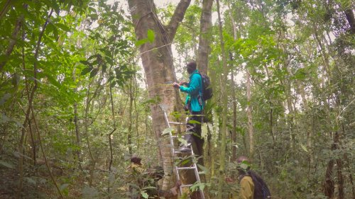 African montane forests are more concentrated stores of carbon than the Amazon, a new study suggests