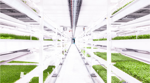 This WW2 bunker is growing sustainable salad leaves deep underground. Here's how