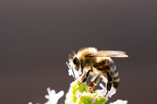 Why bee diversity is essential for maintaining crops