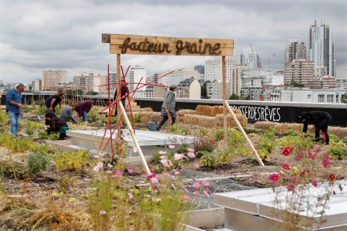 4 reasons why the world needs more urban farming post-pandemic