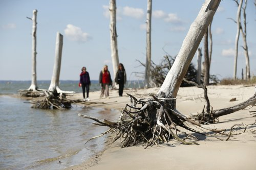 'Ghost forests' are appearing along the US Atlantic coast – this is why it matters
