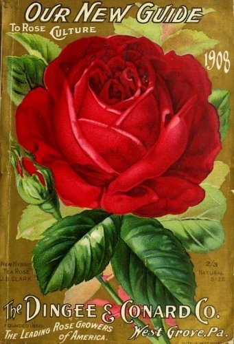 Historical Seed Catalogs – 105 in a series – Our new guide to rose culture (1908) by Dingee & Conard Co.