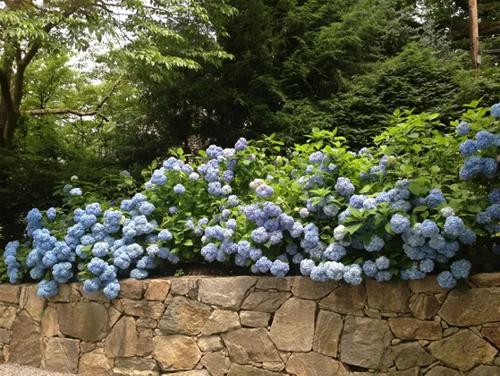 How to Transform a Slope Into a Terraced Garden via Urban Gardens