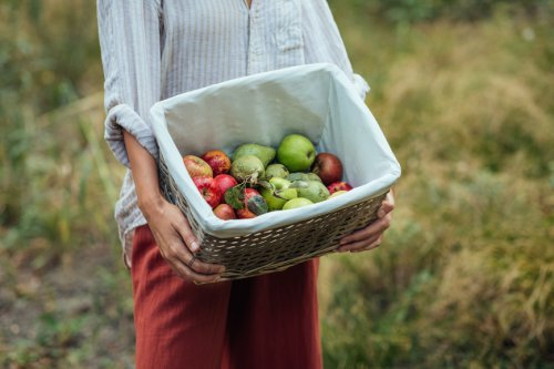 These Expert-Approved Storage Tips Will Keep Your Apples Crisp for as Long as Possible
