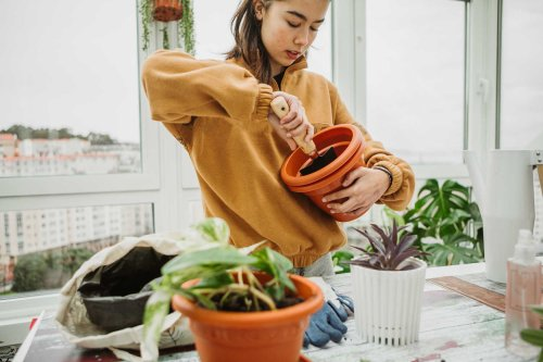 How To Protect Your Garden From End-of-Season Pests, According to a Plant Doctor