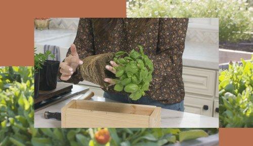 The Easiest Way To Create a DIY Indoor Herb Garden, According to a Verified Gardening Genius