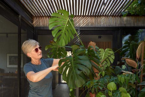 6 Signs Your Houseplant Is Infested With Deadly Pests