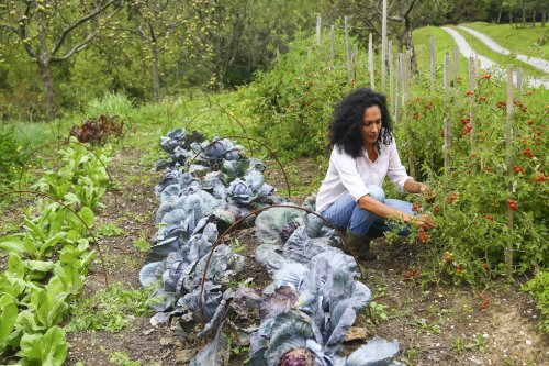 A Permaculture Garden Works With Nature Rather Than Against It—Here's How To Create Your Own in 5 Steps