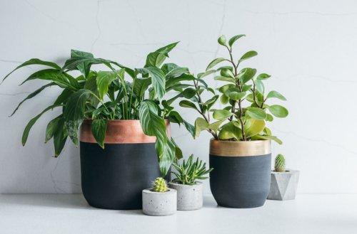 Plants N Garden cover image