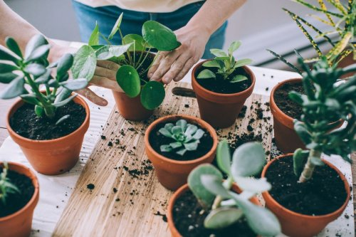 Why Terra Cotta Pots Could Be Your Saving Grace if You Overwater Your Plants