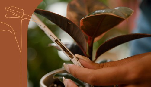 3 Signs You're Underwatering Your Plants, and How To Prevent That From Happening