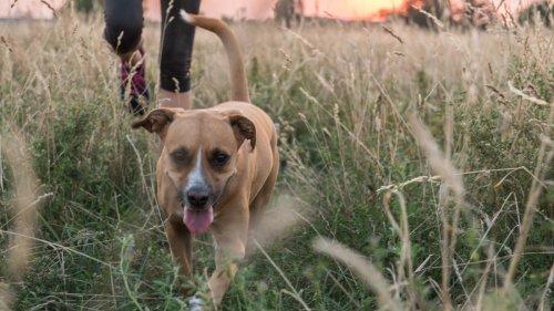 Ein Hundejahr sind sieben Menschenjahre? Forscher widersprechen Faustregel