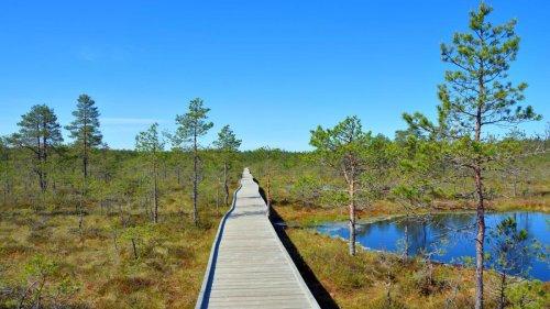 Lahemaa – das ist die volle Dosis Estland
