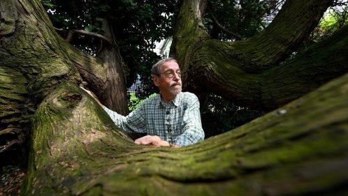 Exotische Hölzer in heimischen Wäldern – Detektiv der seltenen Bäume